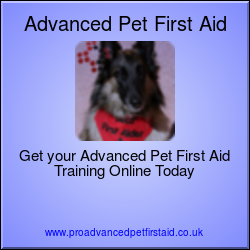 Advanced Pet First Aid Level 3 (VTQ)
