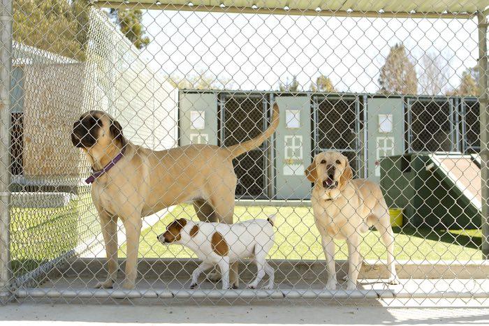 Pet First Aid for Pet Professionals Level 3 (VTQ)