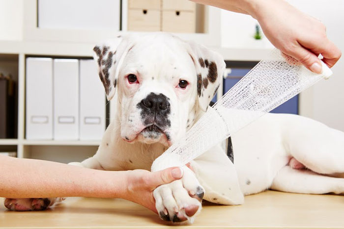 Advanced Pet First Aid Level 3 (VTQ) online and blended part one