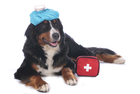 Instructor's Pet First Aid Kit and teaching supplies