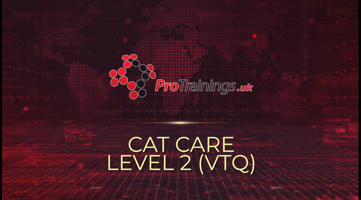 Cat Care Overview