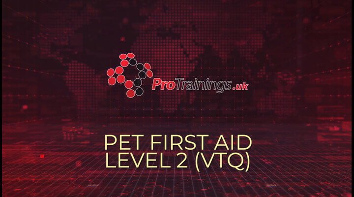 Pet First Aid Course Overview