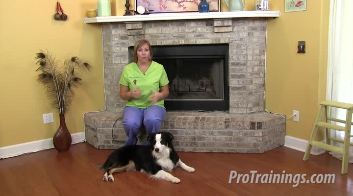Cat and Dog Pulse Rate