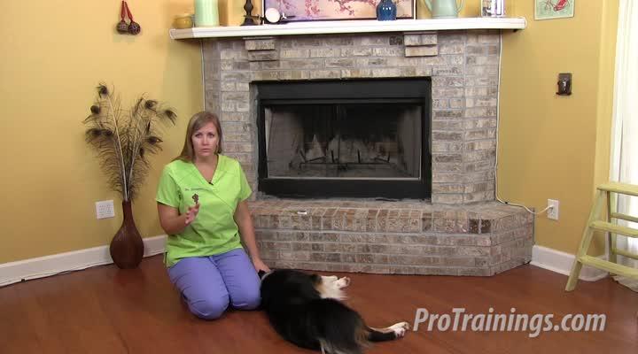Cat and Dog Temperature