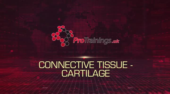 Connective Tissue - Cartilage