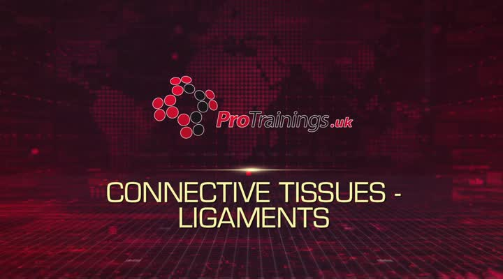 Connective Tissue - Ligaments