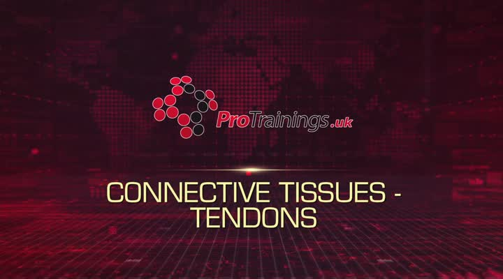 Connective Tissue Tendons