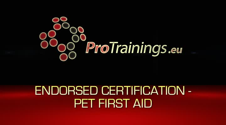 Endorsed pet first aid certificate option