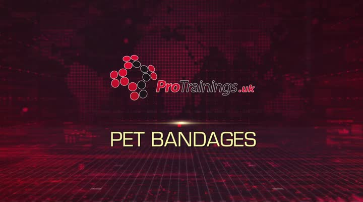 Pet wrap bandages