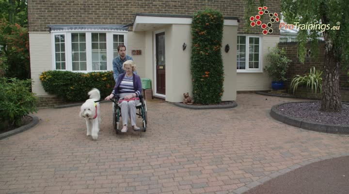 Travelling with assistance or service dogs