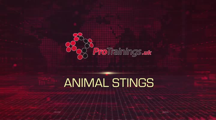 Stings on animals