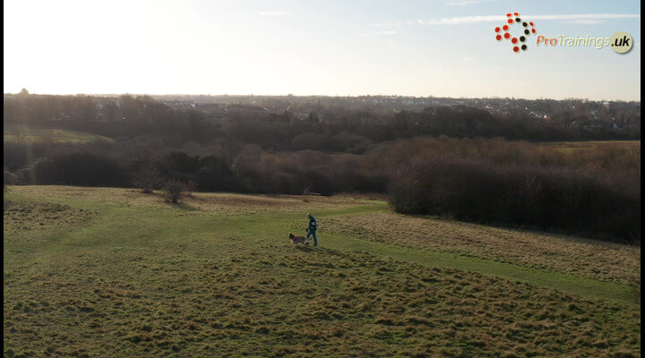 Alabama Foot Rot