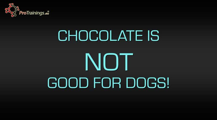Dogs, cats and chocolate