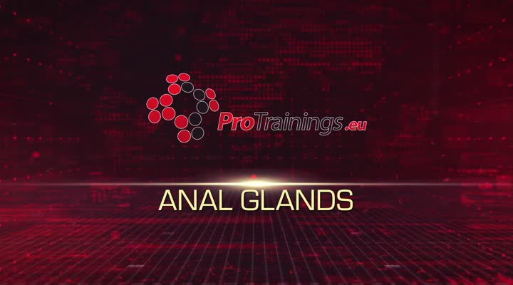 Anal glands