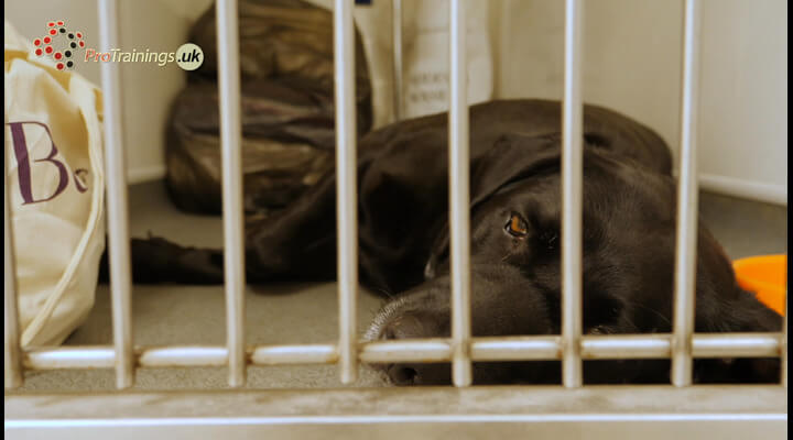 More About Kennel Cough